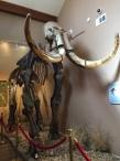 dar-american-indian-museum (2)